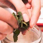 Cách làm tinh dầu bạc hà Tại Nhà và 13 tác dụng của tinh dầu