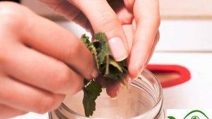 Cách làm tinh dầu bạc hà Tại Nhà, học Chiết xuất Tinh dầu
