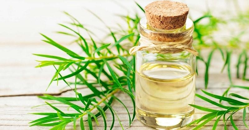 tinh dầu có rất nhiều hữu ích đối với đời sống